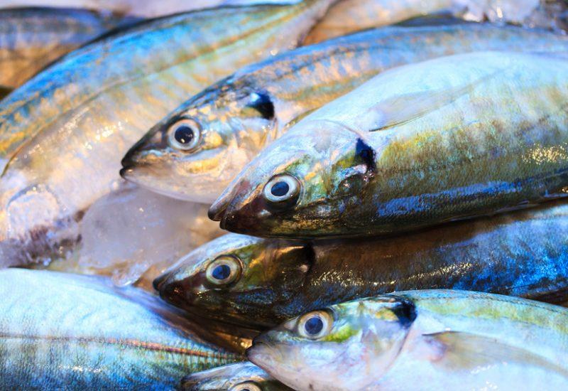Fresh Fish on a Market